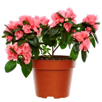 Best indoor plants - Best indoor flower ...
