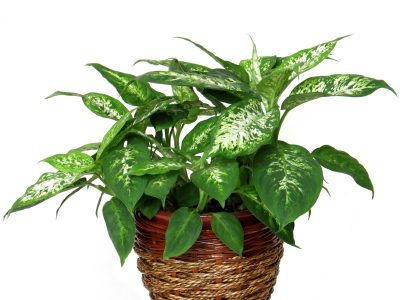 Identifying House Plants By Pictures House Interior